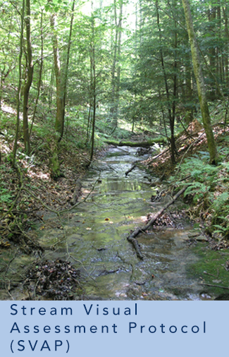 photograph of a stream in a forest representing Lee's research on Stream Visual Assessment Protocol