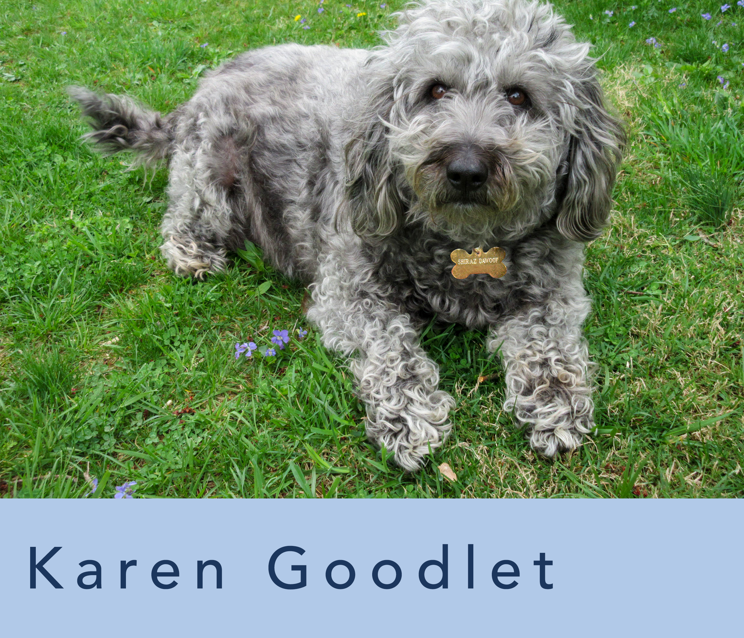 small dog outside representing Karen Goodlet