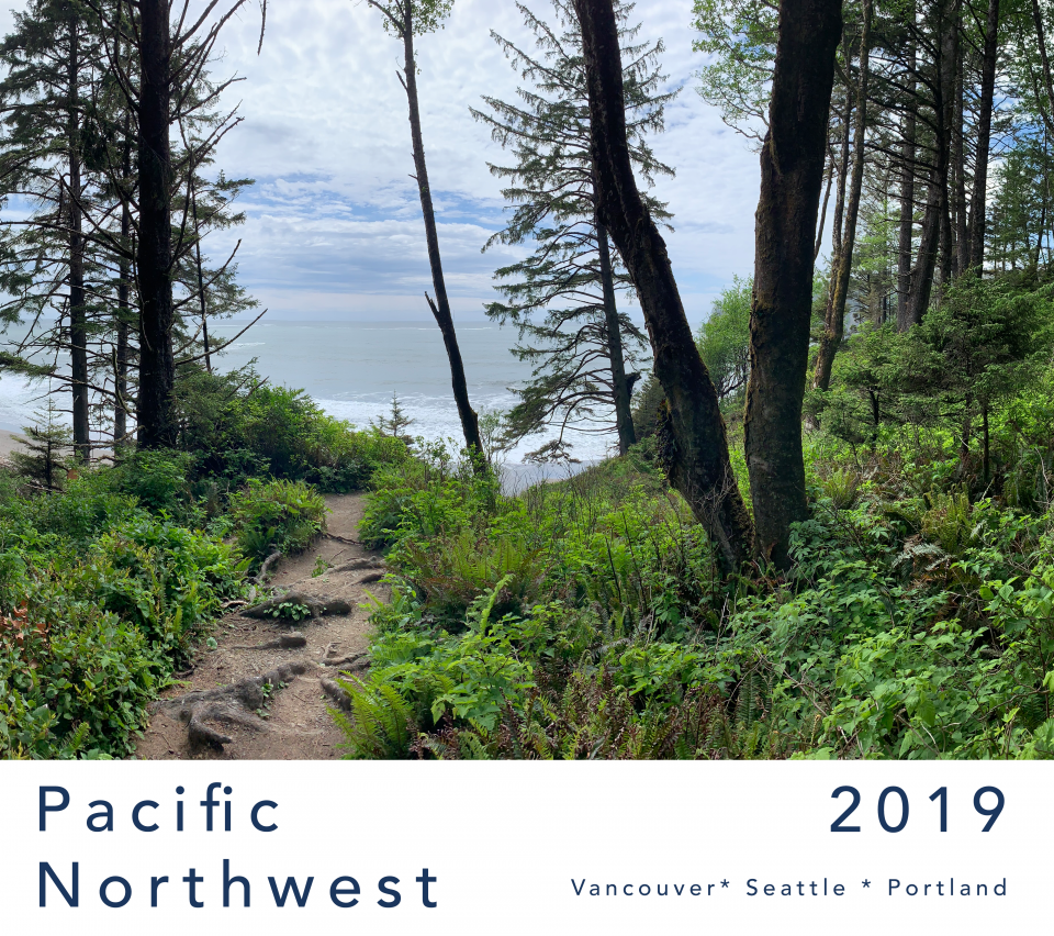 view of forest path in the Pacific Northwest